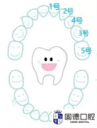 东莞牙科医院:乳牙恒牙是