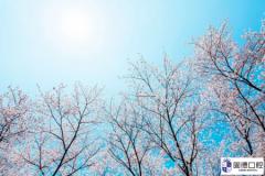东莞口腔医院:春天常见的
