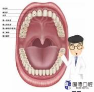 牙齿正确使用说明书!