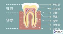 乳牙磕到无大碍,也会影响恒牙的